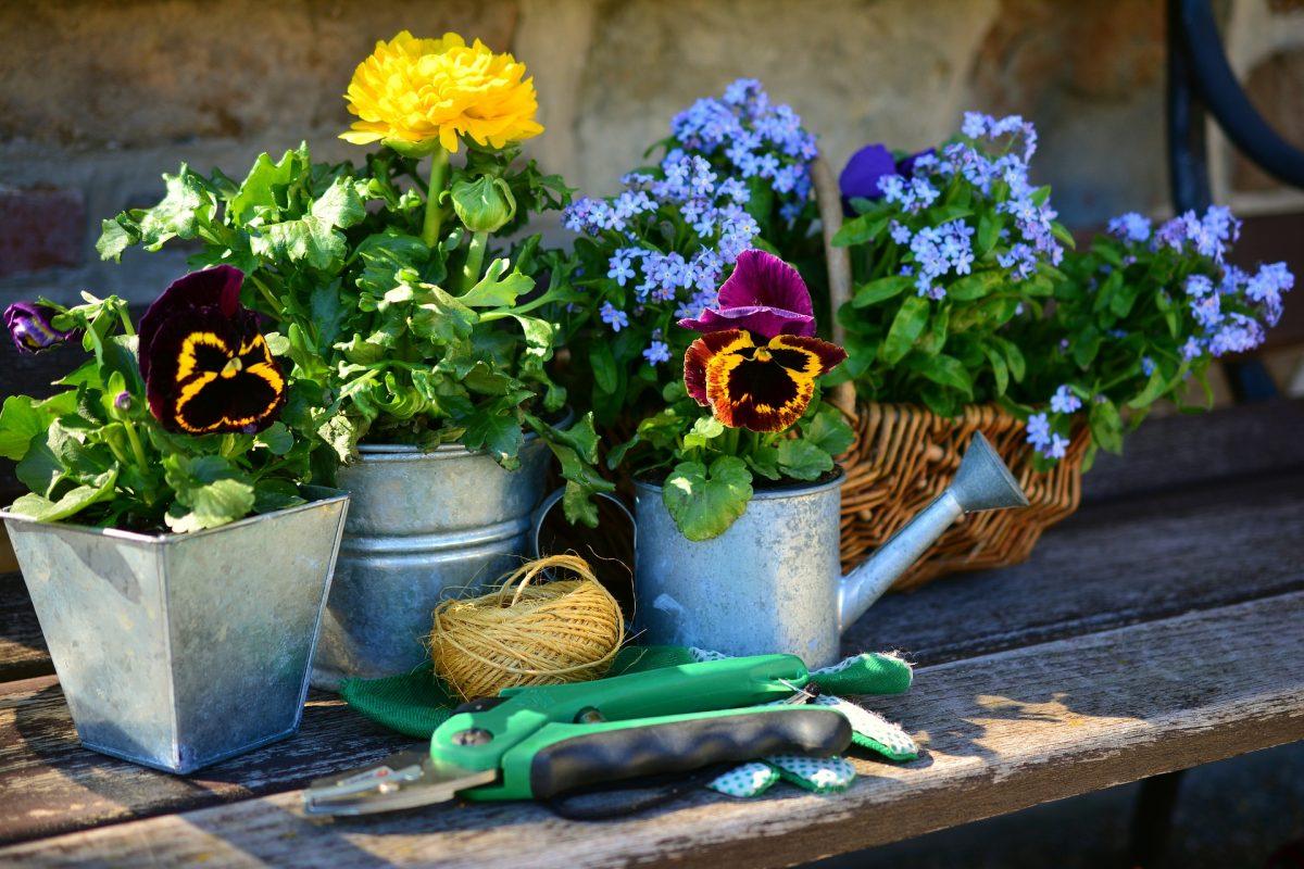 osteopathy & gardening